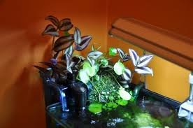 Houseplants-new-recipes-guide-and-tips-for-wellness-at-home-image-5