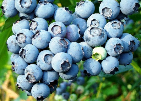 Guide-to-beauty-wellness-blueberry-and-recipes-for-the-skin-image-2