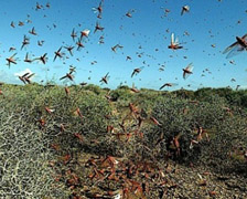 News and events from the world Serbia is invaded by insects
