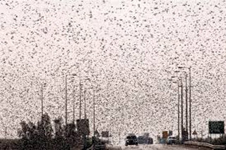 Serbia is invaded by insects