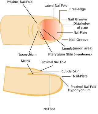 Cure-toenails-mycosis-remedies-treatments-beauty-wellness-structure