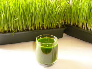 Purify-itself-in-a-natural-way-with-juice-of-wheat-grass-plant