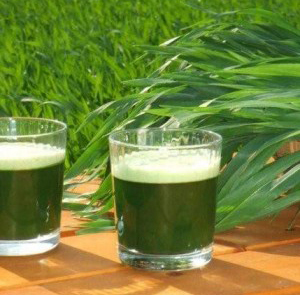 Purify-itself-in-a-natural-way-with-juice-of-wheat-grass-tips