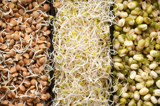 Sprouts do it yourself natural vitamins for wellness recipes
